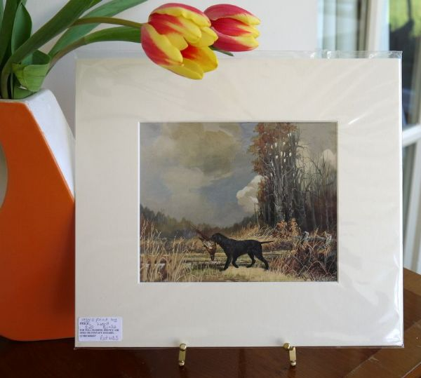 Curly Coated Retriever - Ret WB1 - 1950's print by Ward Binks